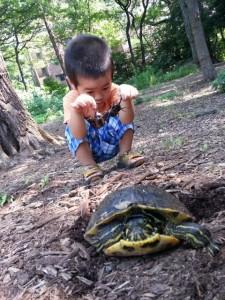 「カブトムシを捕まえにいったら亀に遭遇」田中 一嘉