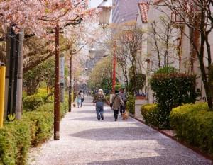 「桜吹雪の街」竹内 正義