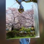 彫刻から桜を(国立らしさ)/彫刻テーマ和賀 一